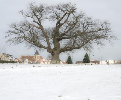 Chêne pédonculé - Chessy