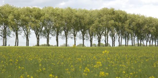 Allée de platanes de Vaux-le-Vicomte - Maincy