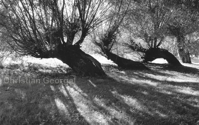 saules - Georgel
